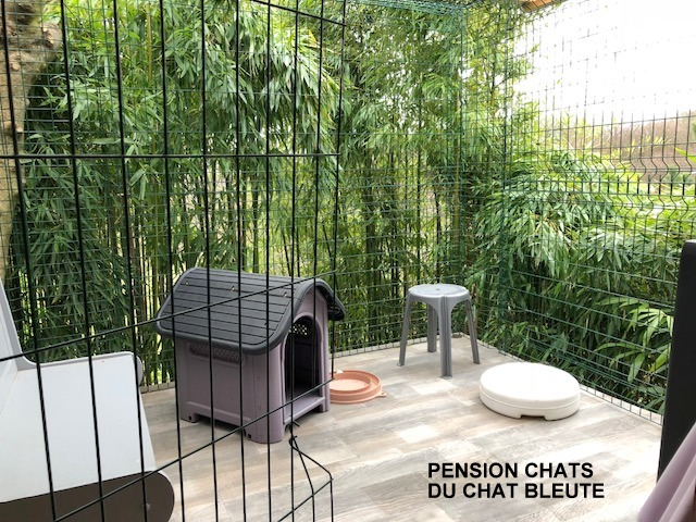 pension chat 42