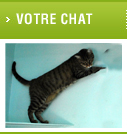 pension chat 78600