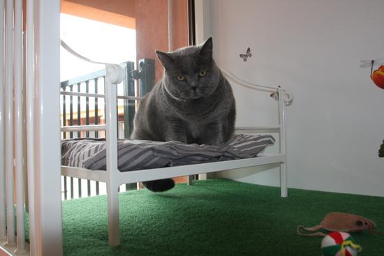 pension chat aix en provence