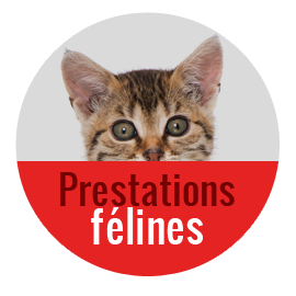 pension chat allier