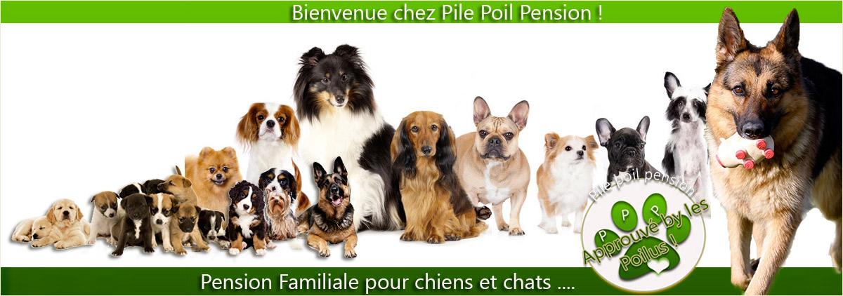 pension chat besancon