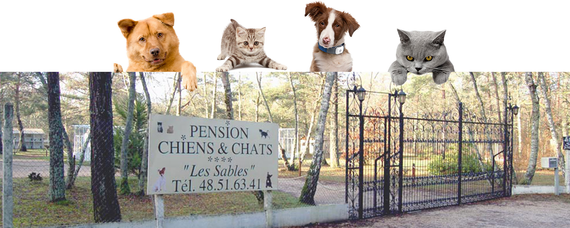 pension chat bourges