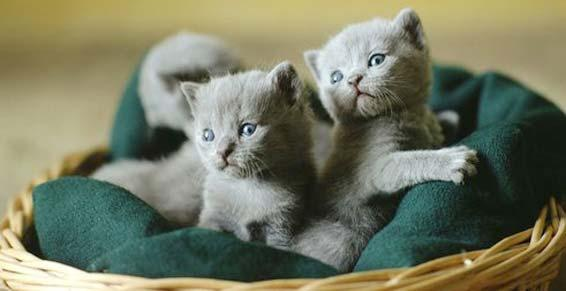 pension chat deux sevres