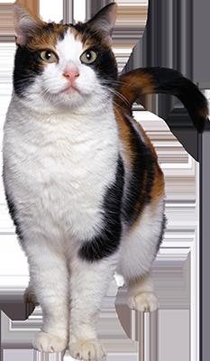 pension chat douai