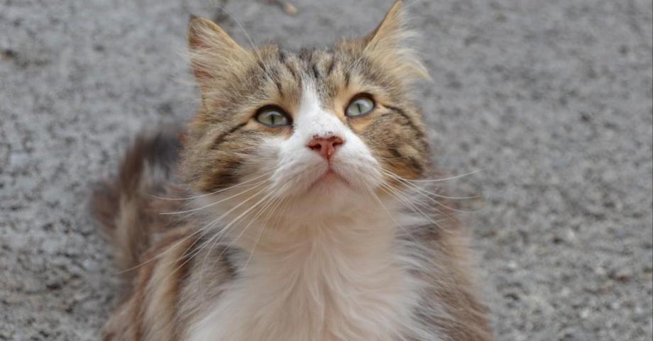 pension chat draguignan