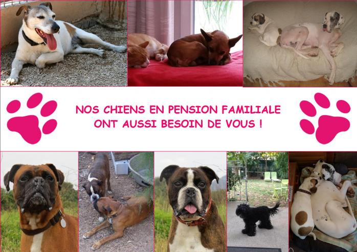 pension chat gareoult