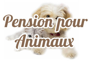 pension chat guadeloupe