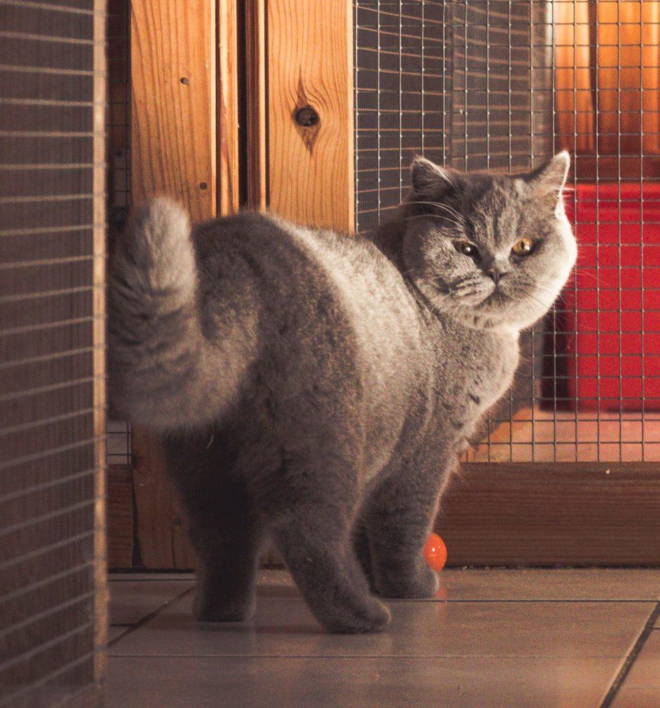 pension chat halluin