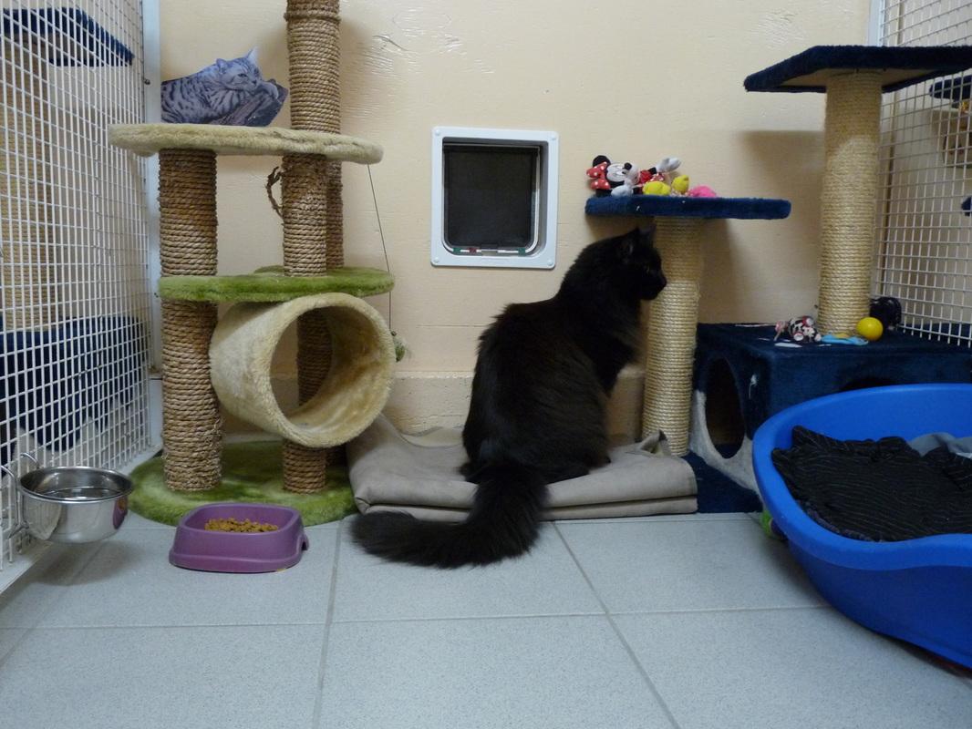 pension chat haute loire
