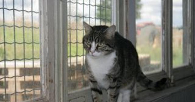 pension chat la bassee