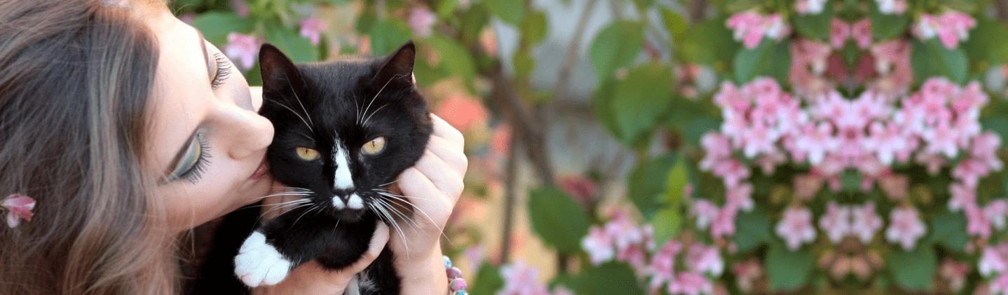 pension chat le mans