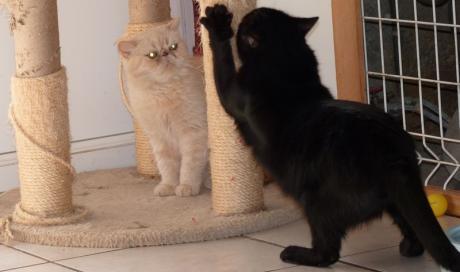 pension chat pas cher
