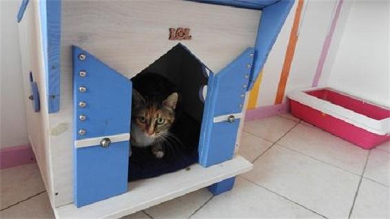 pension chat perigueux