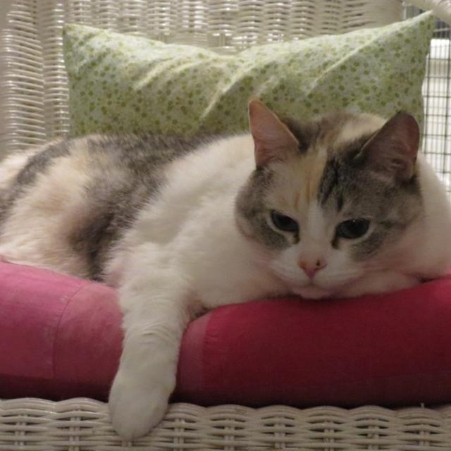 pension chat pontarlier