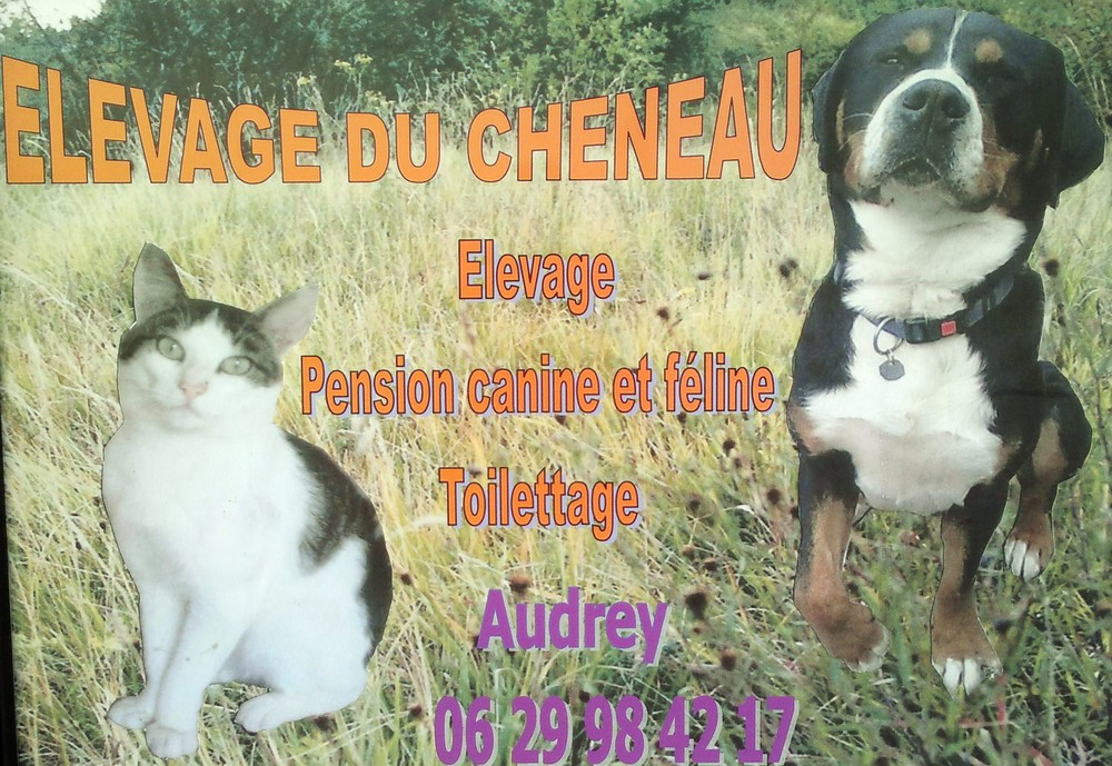 pension chat quesnoy sur deule