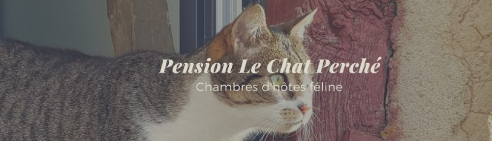 pension chat rennes