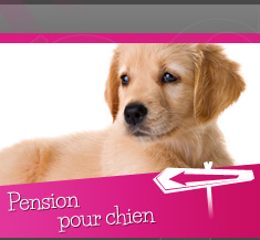 pension chat rives