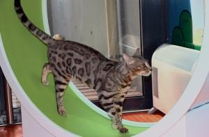 pension chat saint etienne