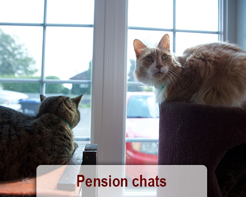 pension chat saint etienne