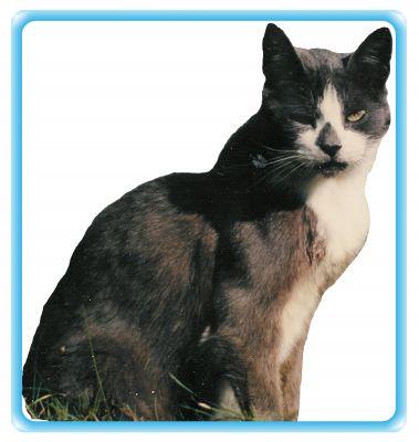 pension chat saint sebastien sur loire