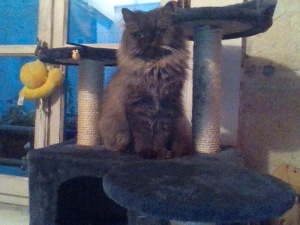 pension chat salon de provence