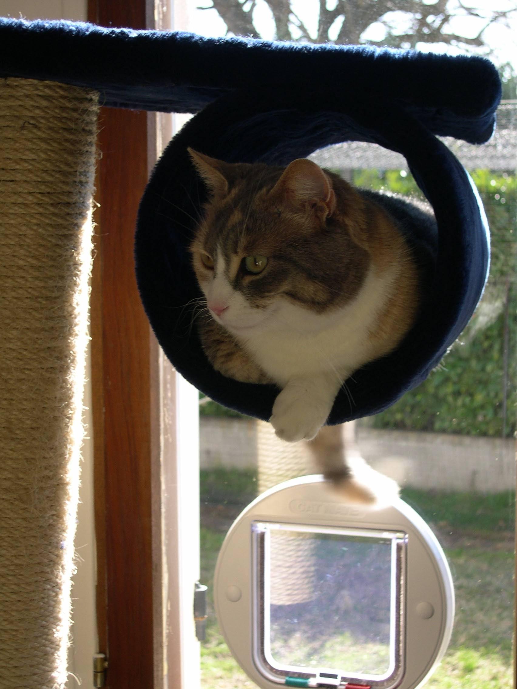 pension chat st quentin la poterie