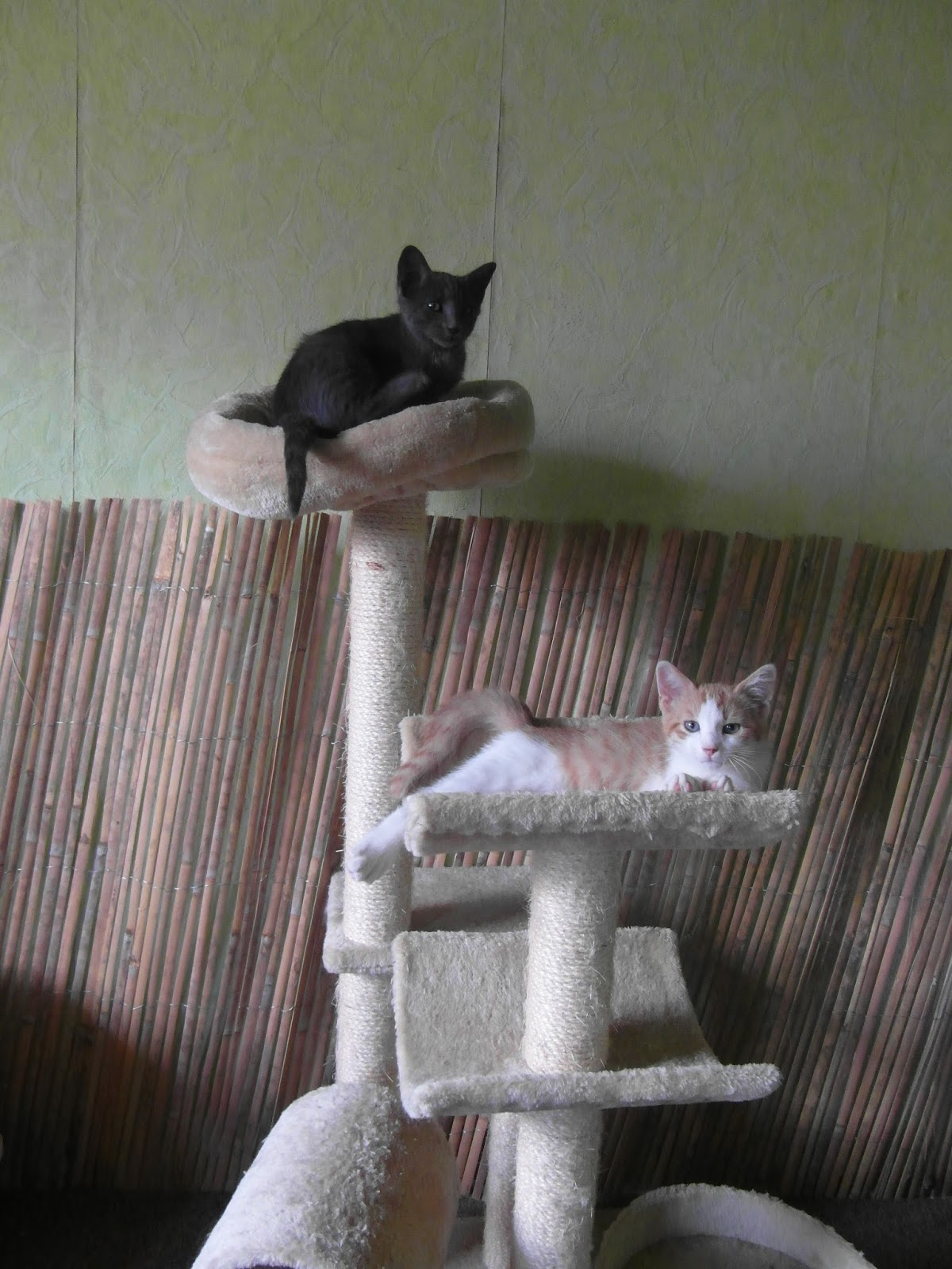 pension chat tarn et garonne