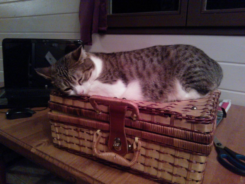 pension chat territoire de belfort