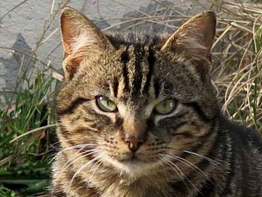 pension chat vigneux de bretagne