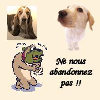 pension chien 13210