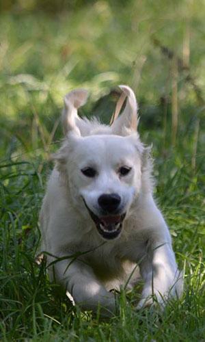 pension chien 17000