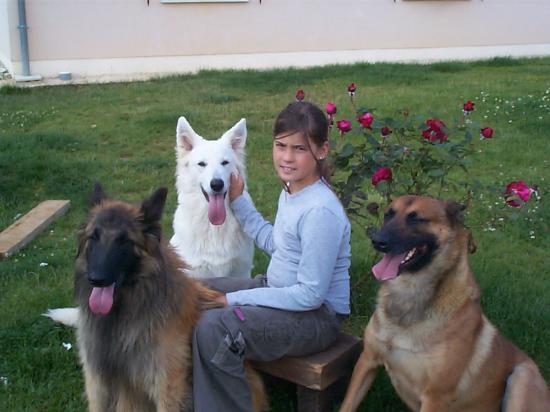 pension chien 18