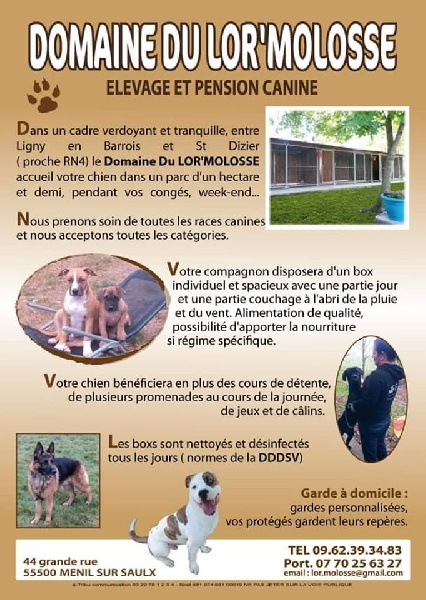 pension chien 25