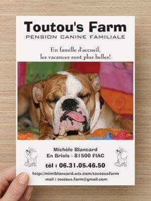 pension chien 31450