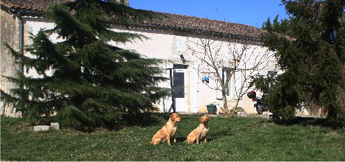 pension chien 33