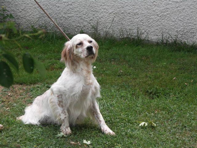 pension chien 42600