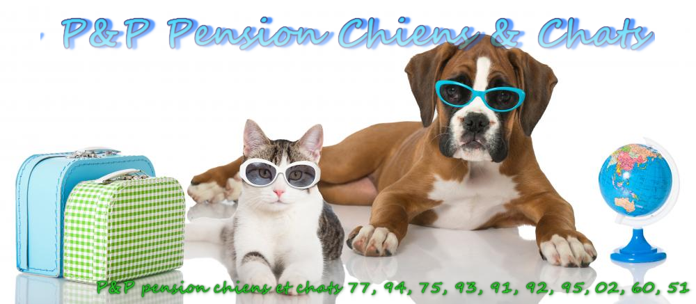 pension chien 51