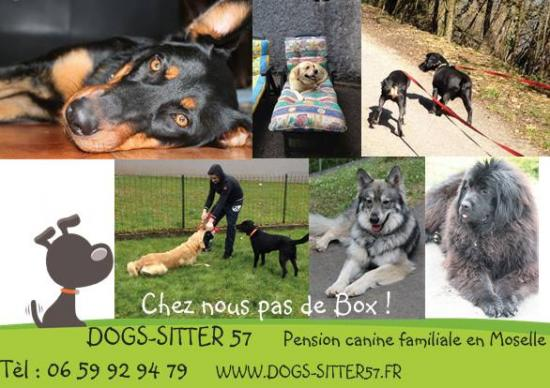 pension chien 57