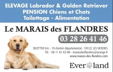 pension chien 62120