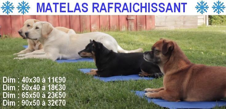 pension chien 62120