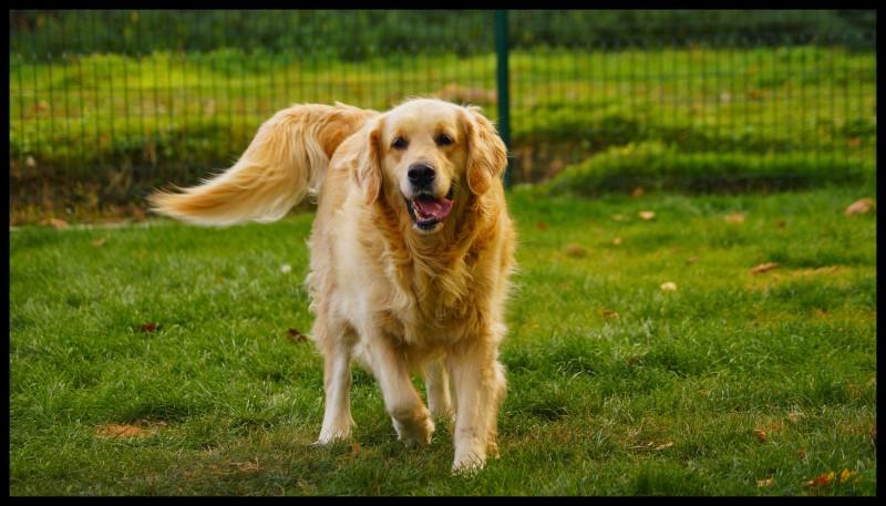 pension chien 77 chatelet en brie
