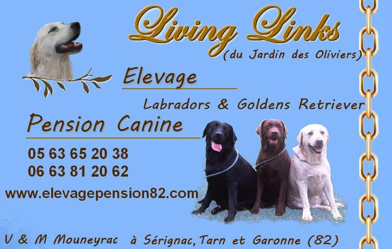 pension chien 82