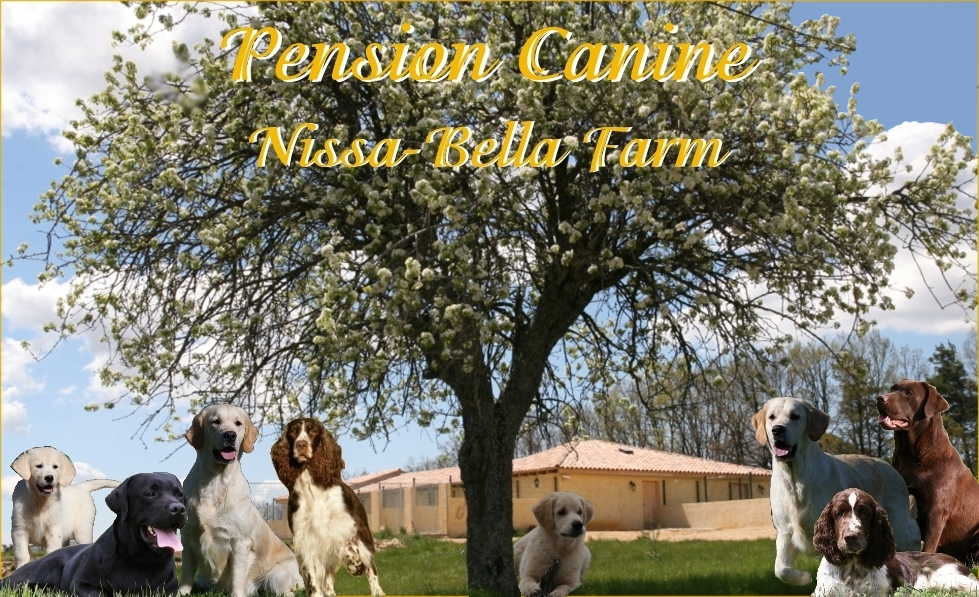 pension chien 84