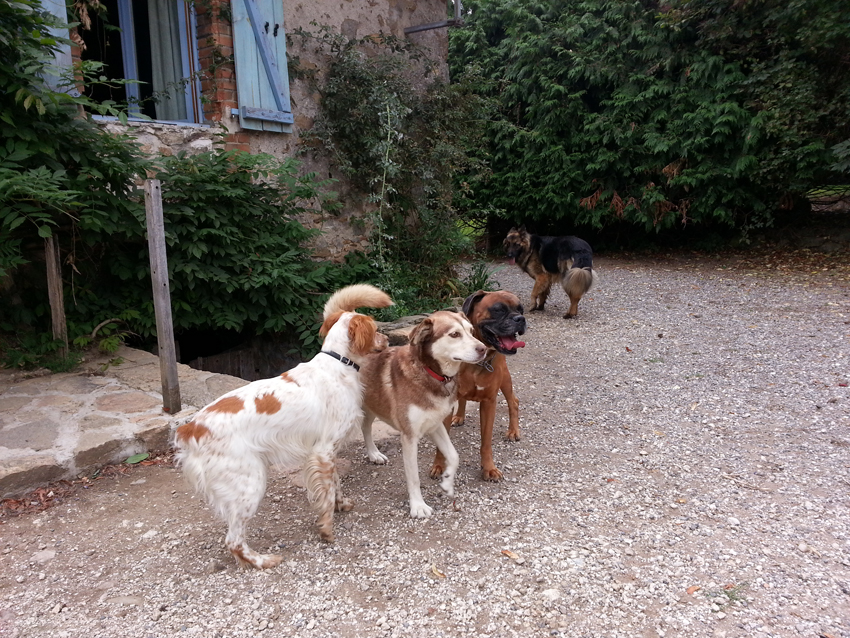 pension chien 87