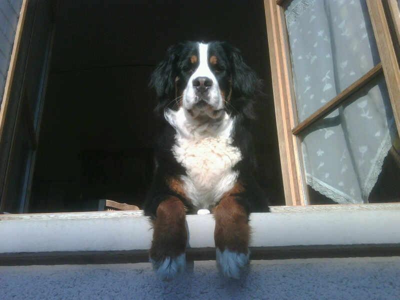 pension chien 92