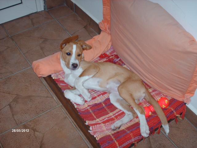 pension chien 97410