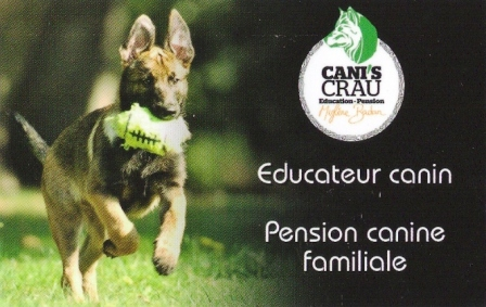 pension chien arles