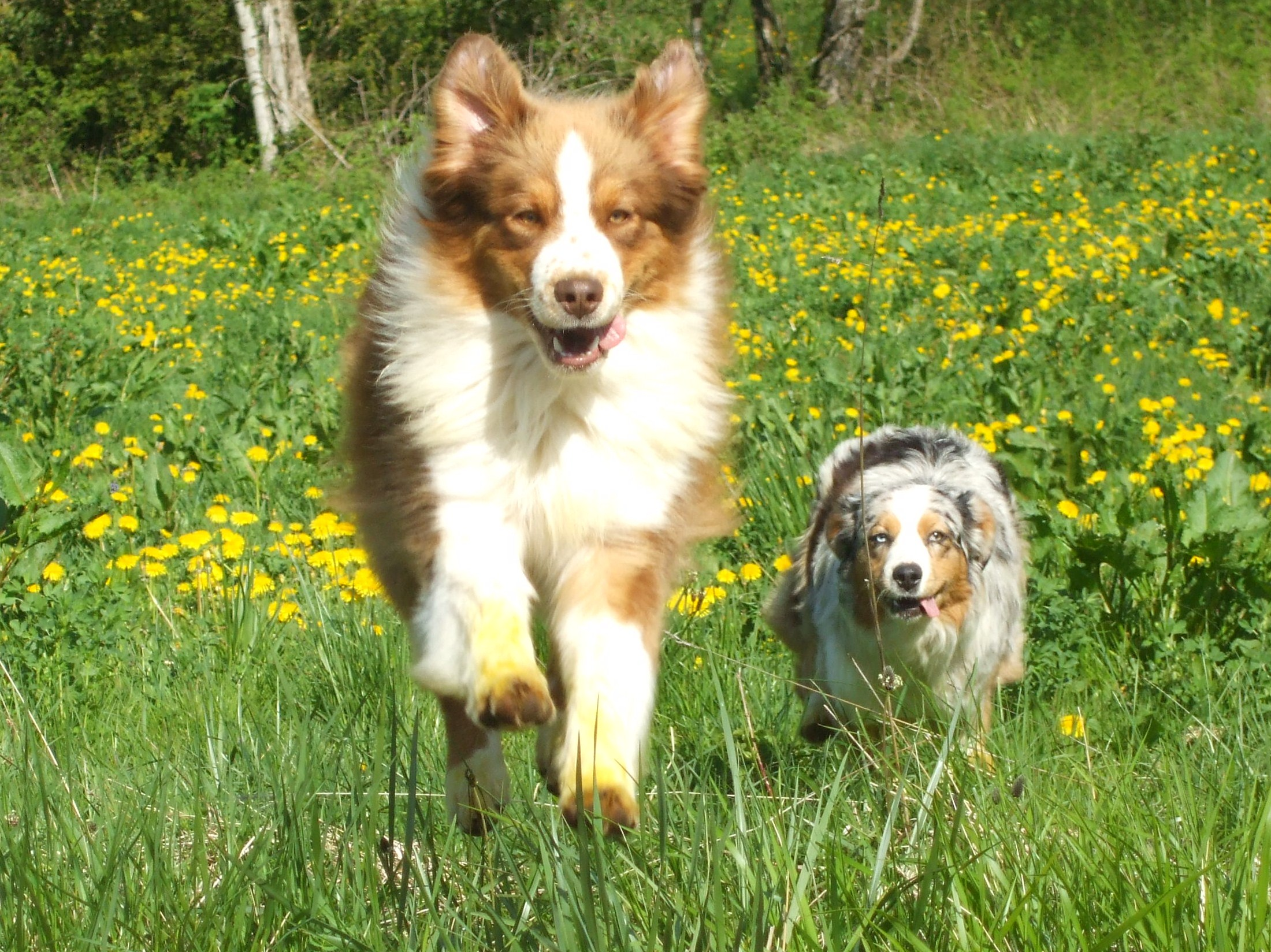 pension chien bellegarde