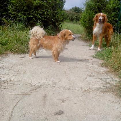 pension chien brest