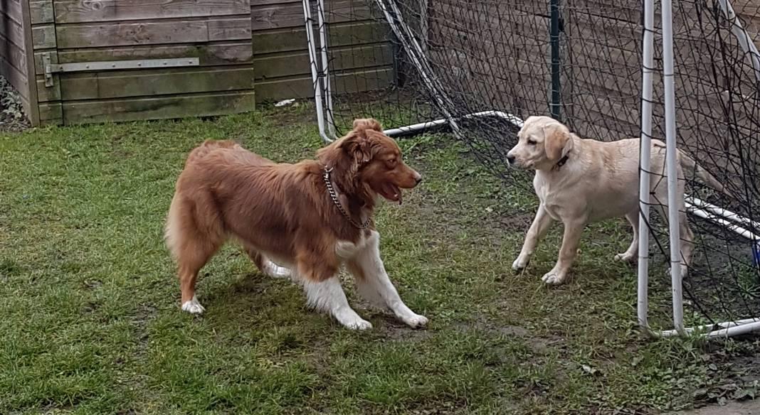 pension chien chalon sur saone